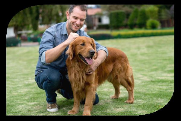 Pet food állateledel kutyáknak