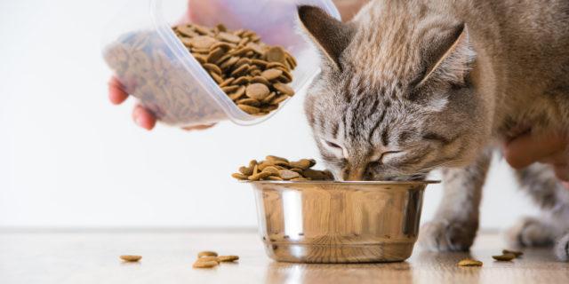 Macskák szénhidrát emésztése