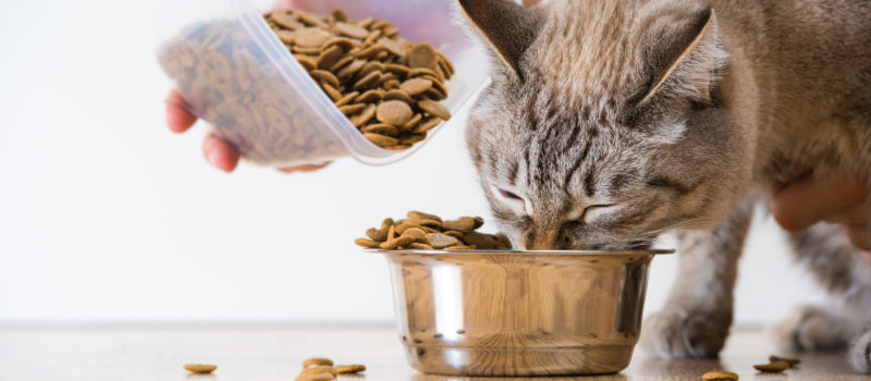 Tudósok vizsgálják a macskák szénhidrát emésztését