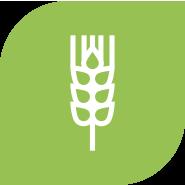 Növénytermesztés ikon
