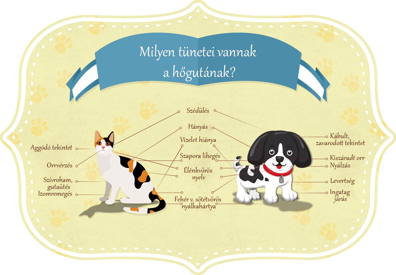 Pet food hőguta tünetei