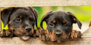 hogyan_válasszun_kutyát