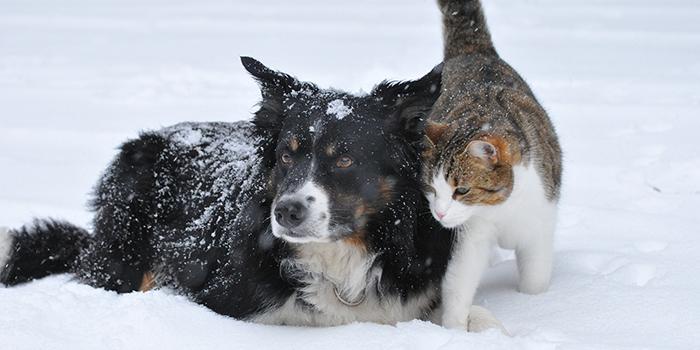 Aktualitások télen pet food