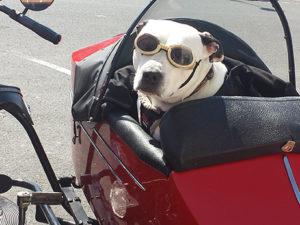 Utazás kisállattal - kutya motoron