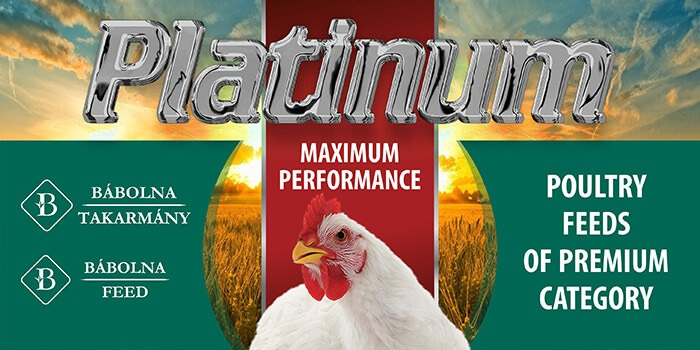 Exceeding a broiler index of 500 with Bábolna Feed