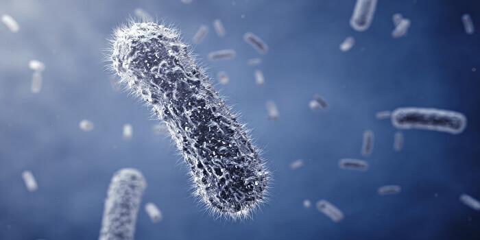 Laboratóriumi vizsgálatok a sertések Salmonella-fertőzésének megelőzésére