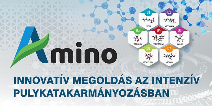 Az AMINO pulykatakarmányok előnevelési sikere